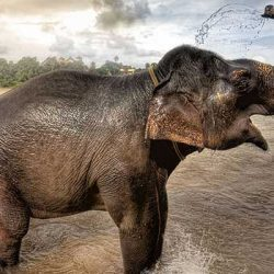 imagen elefante trompa hacia arriba