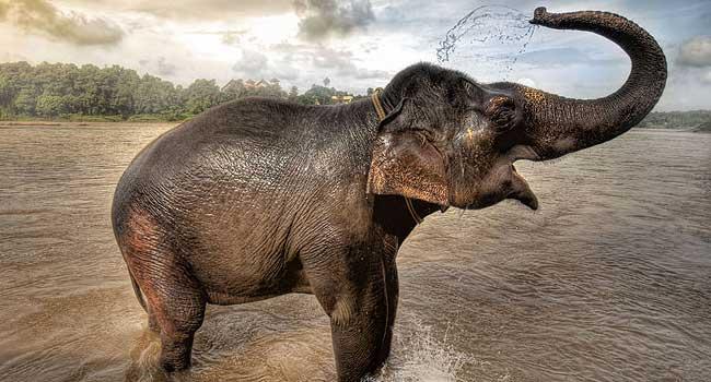 Cómo colocar un elefante de la buena suerte en la casa
