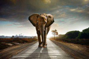 camino elefante