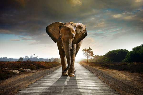 ¿Qué significa que te regalen un elefante?